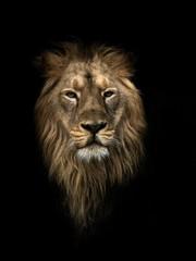 PANTHERA LEO PERSICA, Persian lion