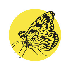 Icon of butterfly silhouette on the yellow background.