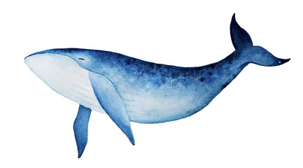 Blue whale watercolor illustration. Spirit animal, totem, wisdom holder, history keeper, peaceful strength, inner truth, creativity, emotional rebirth. Hand drawn painting, isolated, white background.