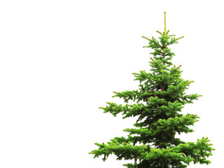 Christmas tree isolated on white background. Natural fresh green gorgeous spruce tree without ornaments. Object for decorating Christmas greetings for the site and printing