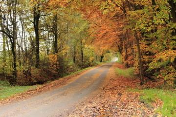 Ländliche Straße im Herbst