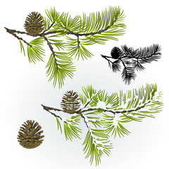 Pine tree and pine cones branch autumnal and winter snowy and silhouette natural background vector illustration editable hand draw