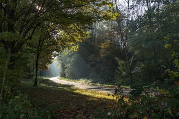 Morning sunlight shining thru trees