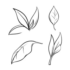 tea leaves set in lines, vector illustration isolated on white background