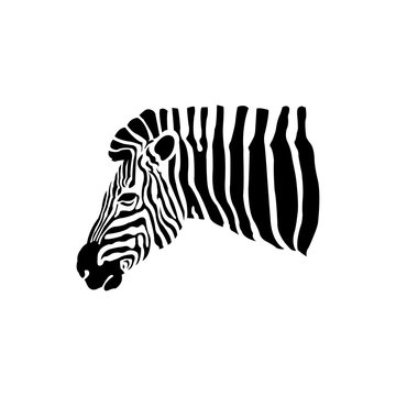 Vector of an Zebra head on a white background. Wild Animals.