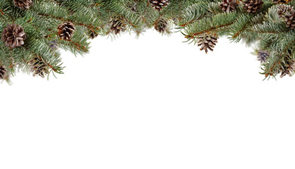 Fir branches with cones, isolated on white background