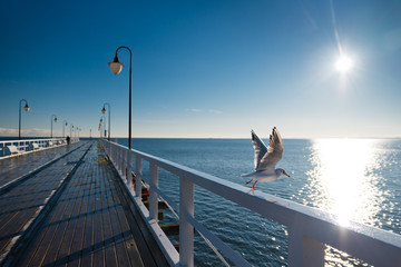 Seagulls starting fly from handrail at the Baltic Sea in Poland. Wall mural