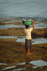 Balinese Woman Hauls Fish in a Bucket. After fishermen return to the village after a night of work a woman hauls the catch to be sold at the market.