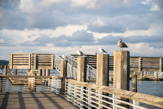Seagulls Lined Up on Pilings of Public Fishing Pier with Dramatic Sky and Lighting of Setting Sun