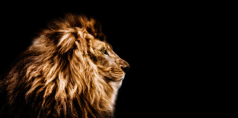 Printed roller blinds Lion Portrait of a Beautiful lion, Cat in profile, lion in dark