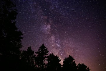 Milky Way Galaxy Behind Trees Night Sky