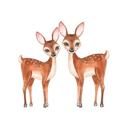 Сute fawns, isolated on white background. Watercolor illustration