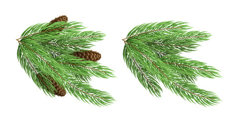 Branches of a Christmas green tree with cones isolated on white background. Festive element. Winter season. Vector