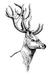 Ink drawing of a deer head