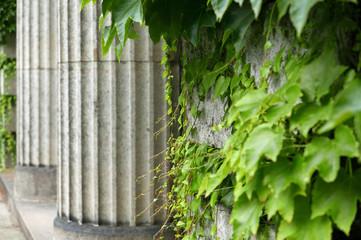 Kannelierte Säulen mit Efeu im Vordergrund
