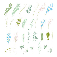 Vector set of plants, flowers and herbs
