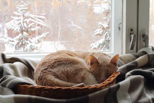 A red cat sleeps in a basket near the window in winter.