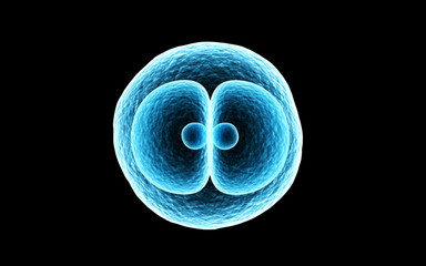 3d rendered Zygote Cell Division isolated on dark background