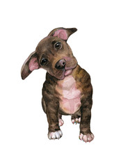 dog watercolor illustration of a puppy pit bull