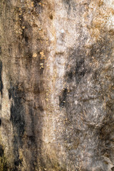 cracked trunk of old oak without bark, dead tree, natural textural background