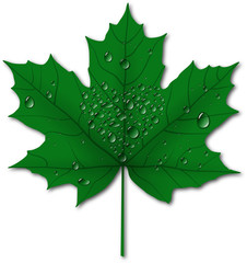 Maple leaf with drops, heart shape