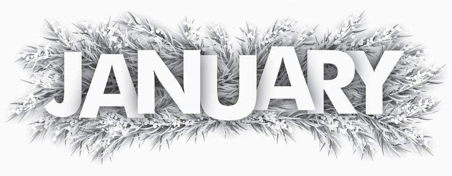 Frozen Fir Twigs January