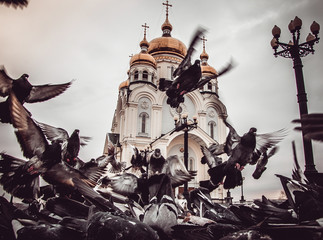 flock of pigeons in front of the temple