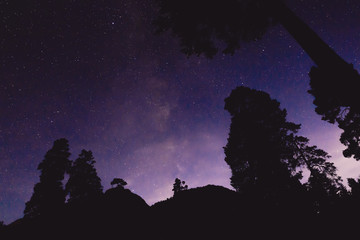 Milky Way and some trees in the mountains. Night landscape