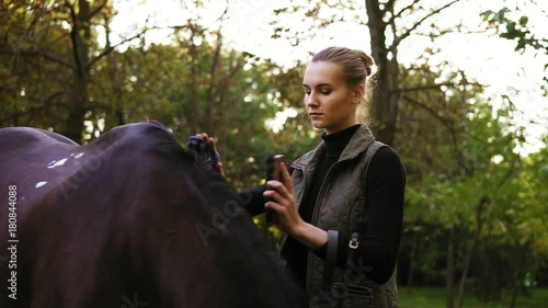 Attractive young woman brushing and grooming her stunning muscular horse. Cleaning beautiful and healthy shiny horse coat with natural bristle brush outside