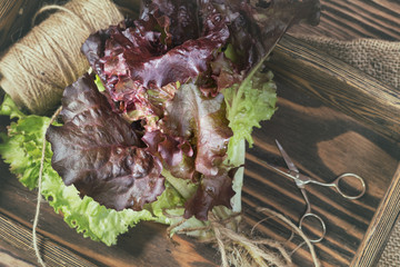 Bunch of lettuce in a wooden box
