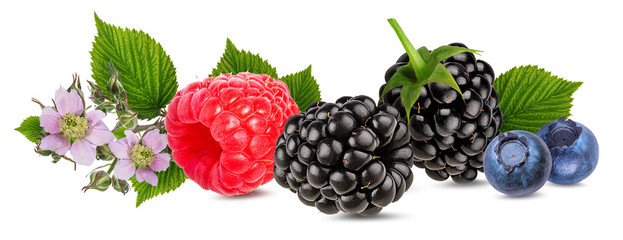 Fototapete - Berries collection. Raspberry, blueberry, blackberry  isolated on white.