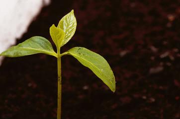 маленькое дерево растёт в земле