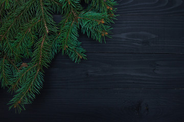 Christmas green spruce branch isolated on black background