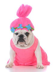 female dog in pink