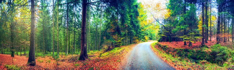 Panoramic autumn landscape with forest road. Fall nature background