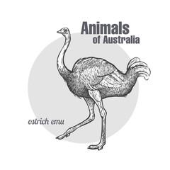 Ostrich Emu bird.