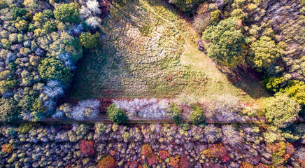 Drone view close-up of a forest with colorful trees and empty area