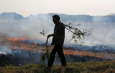 A farmer burns paddy waste stubble in a field on the outskirts of Ahmedabad