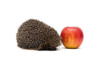 hedgehog and red apple isolated on white background