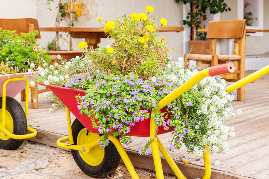 wheelbarrows with flowers in the city