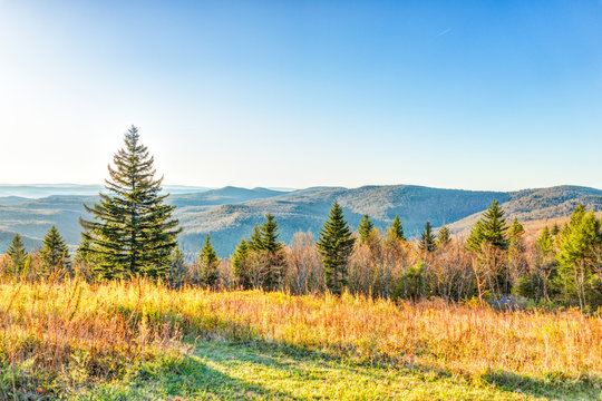 Overlook of West Virginia mountains in autumn fall with foliage and one pine tree in morning sunrise sunlight