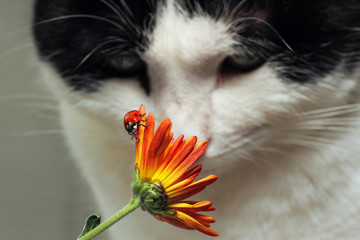 Ladybug and cat
