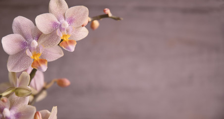 Wall Murals Orchid Orchidee, Orchideenblüten