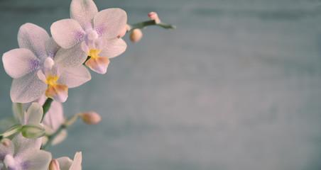 Orchidee, Orchideenblüten