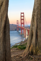 Golden Gate Bridge Through Cypress Trees. California Coastal Trail, The Presidio, San Francisco, California, USA.