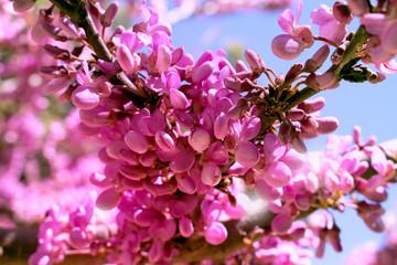 Flowers. Beautiful pink tree. Sky and spring plant. Macro.