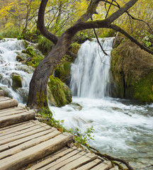 old tree and wooden pathway with waterfall in Croatia