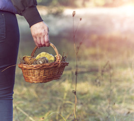 basket with forest mushrooms in a female hand