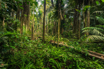 Manu National Park, Peru - August 07, 2017: The Amazon rainforest in Manu National Park, Peru