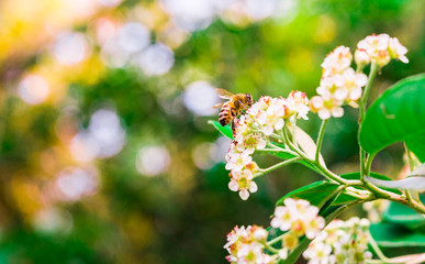 Macro photo of a white flower and a bee pollinating it in the forest on a sunny day